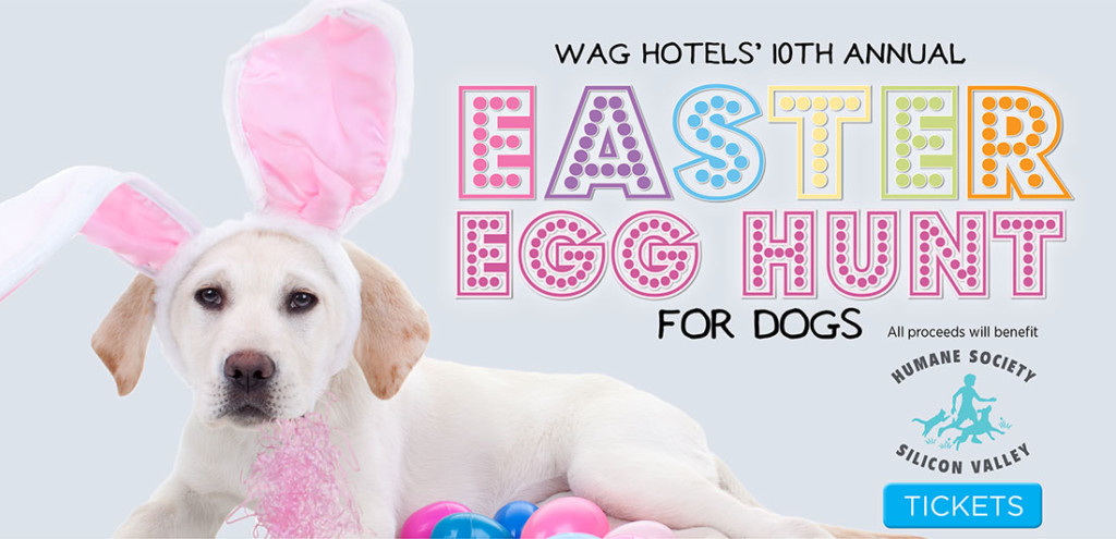 Wag Hotels' Easter Egg Hunt