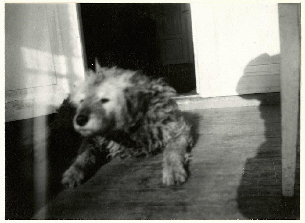 pets in art-edvard munch dog Fips 1930-flashbak